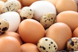 Le uova, protagoniste dell'incubazione artificiale. Uova di gallina e quaglia
