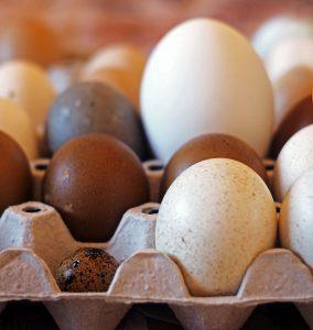 uova di varie specie di avicoli in un portauovo