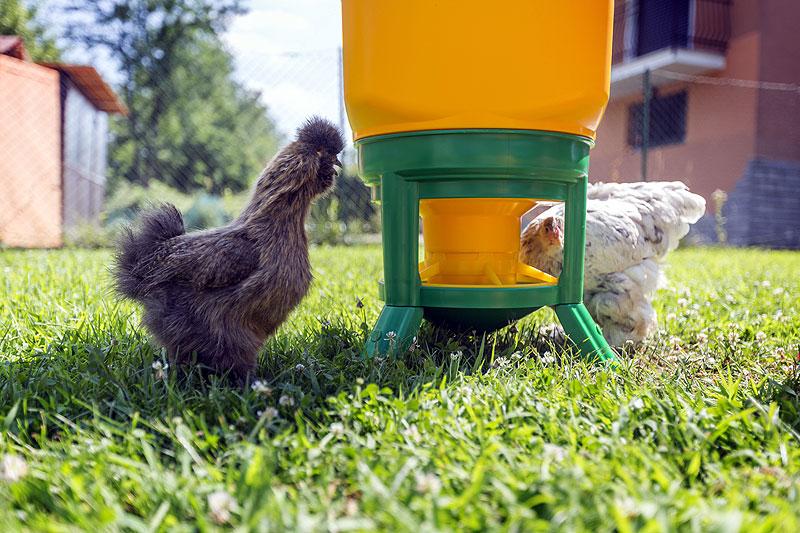 Mangiatoie e abbeveratoi a serbatoio sono molto utili nell'allevamento all'aperto e limitano le contaminazioni da parte dei selvatici. Foto di Erik Colombo, esemplari di Lara Massaiu.