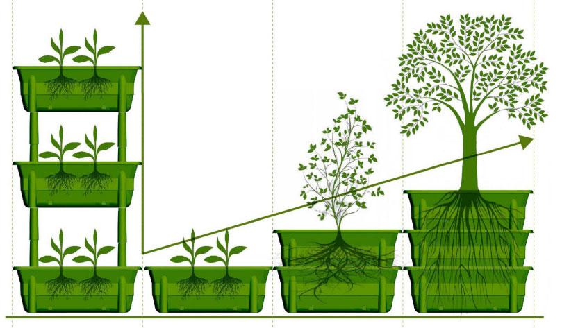 La struttura modulare di Orto&Orto permette di creare composizioni differenti e di coltivare piante di vari tipi, dalle verdure ai piccoli alberi da frutto.