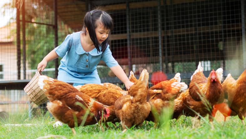 galline Novital Mangiatoia KUBIC da kg.20 tacchini e gallinacei di media e grossa taglia. Ideale per polli