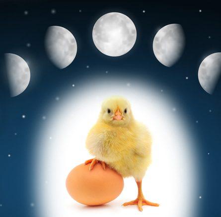 Calendario Lunare Avicolo