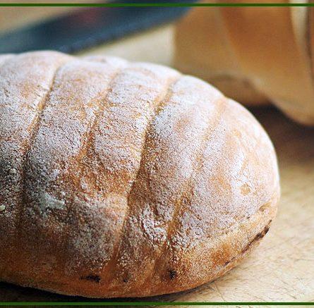 Dare il pane ai polli: ecco come fare