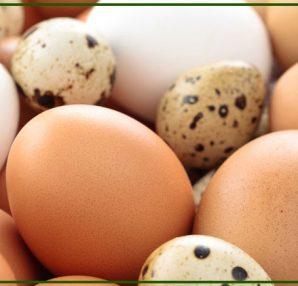 uova da incubare - come trattarle al meglio