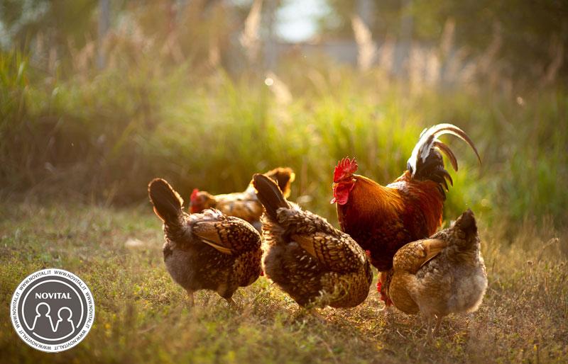 uova da incubare - i riproduttori