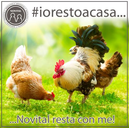 emergenza coronavirus-covid19-#iorestoacasa